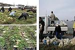 한부모 주말농장 무 수확 및 사랑 한가득 나누기 행사 실시 (2009.11.16)사진